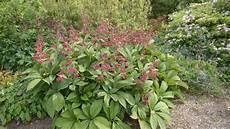 passende pflanzen f 252 r den schattigen garten ndr de
