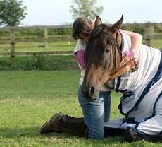 Op Versicherung Pferd - pferde op versicherung ausschl 252 sse