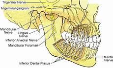 Ilmu Kedokteran Gigi Inervasi Pada Rahang Dan Gigi