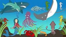Kata Kata Bijak Gambar Hewan Di Laut Kartun Kata Kata
