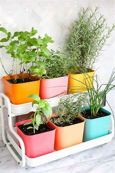 make a colorful indoor herb garden a beautiful mess