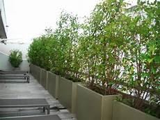 bac pour arbuste de jardin bacs 224 plantes pour former un brise vue balcon en 2019