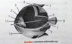 Perhatikan Gambar Anatomi Mata Berikut Lensa Iris
