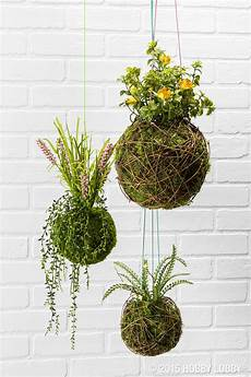 indooroutdoor hanging moss balls filled with plants grow some green without the watering can with ready to go