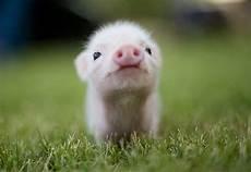 unbelievably cute animals adorable photos