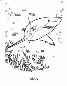 Malvorlage Hai Einfach Malvorlagen Fur Kinder Ausmalbilder Hai Kostenlos Page