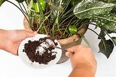 kaffee gegen gerüche ger 252 che neutralisieren mit kaffesatz unsere kaffee hacks