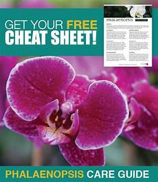free sheet about caring for your phalaenopsis orchids it covers crucial care tips about