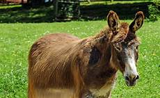 animaux de la ferme les 10 principaux animaux de la ferme