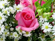 fiori e immagini fiori immagini