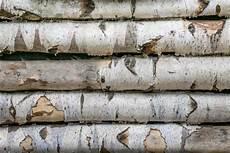 nachteile holz vorteile und nachteile birkenholz 183 ratgeber haus garten