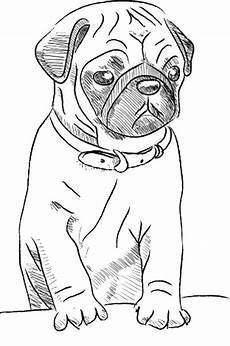 Ausmalbilder Hunde Mops Free Printable Drawing Pages Of Pugs Search