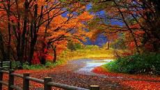 Fall Backgrounds 2019 10 best high definition autumn wallpaper hd 1080p for