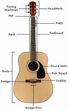 Acoustic Guitar Anatomy In 2019 Acoustic