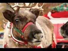 proof santa is real reindeer on the