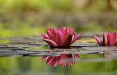 frasi i fiori 45 frasi sui fiori per il buongiorno e per mille altre