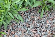 alternative zu rindenmulch und kies ob bodendeckerpflanzen rindenmulch oder kiesbeet anlegen