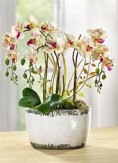 Kunst Orchidee Im Topf - orchidee im keramiktopf kunst textilpflanzen