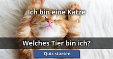 Ich Bin Eine Katze Welches Tier Bin Ich Lusorlab Quizzes
