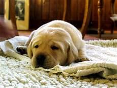 Hund Pinkelt Wohnung Hundemagazin Net