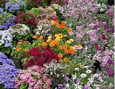 di masino fiori le erbe di ygraayne magia dei semi e della semina