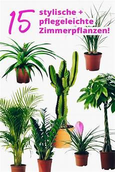 Pflanzen Wenig Licht - der pflanzen guide 15 stylische und pflegeleichte
