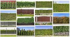 Gartenabtrennung Zum Nachbarn - planting a hedge fence