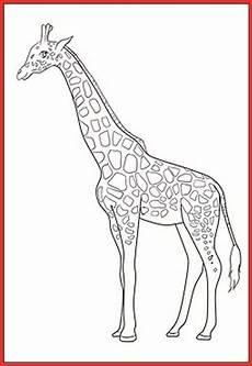 Giraffe Ausmalbilder Malvorlagen Malvorlage Giraffe Kinderzimmer Rooms Project