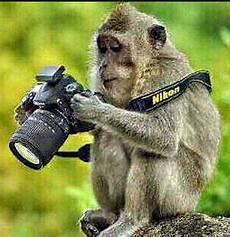 Kumpulan Gambar Monyet Lucu