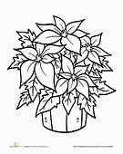 Poinsettia Coloring Pictures  Only Pages