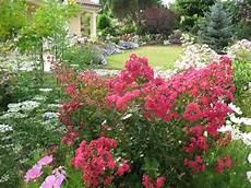 jardin en aout roses du jardin ch 234 neland le jardin en ao 251 t