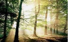 Foto Hutan Yang Sangat Indah