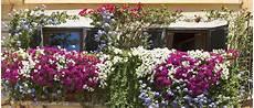 Quelles Plantes Choisir Pour Cacher Balcon De La Vue
