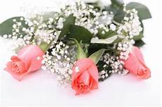 Gambar Bunga Mawar Yang Cantik Cantik Wallpaper