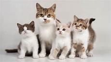 Paling Bagus 22 Gambar Kucing Lucu Banyak