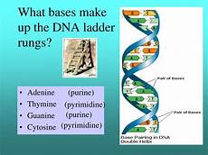 ppt aim how does dna store the genetic information