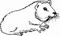 meerschweinchen malvorlagen kostenlos zum ausdrucken
