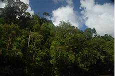 Gambar Ilustrasi Hutan Tropis Hilustrasi