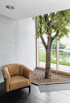 baum im raum gro 223 er baum gro 223 pflanzen innenraum atrium gewerbe privat