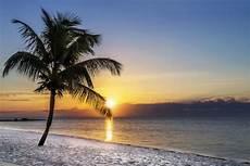 Malvorlagen Meer Und Strand Bilder Acrylglasbild Palme Am Strand Sonnenuntergang 252 Ber Dem
