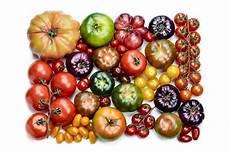 Wie Gesund Sind Tomaten - sind tomaten gesund n 228 hrstoffe kalorien ballaststoffe