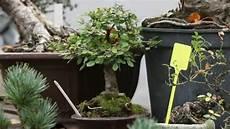 bonsai baum berlin bonsai zucht in den weddinger uferhallen