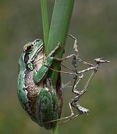 Frosch Malvorlagen Jogja Timing Wow What A Photo By Mehmet Karacan