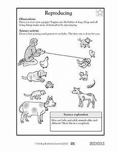 1st grade 2nd grade kindergarten science worksheets find the baby science worksheets