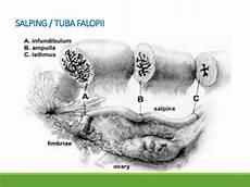 Anatomi Dan Fisiologi Reproduksi Wanita