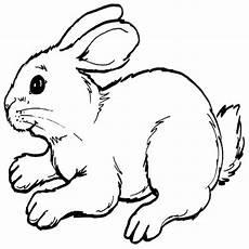 Ausmalbilder Hasen Baby Cd Weiszes Kaninchen Zum Weddingpics
