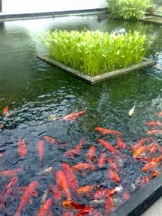 Les Bassins 224 Poissons Au Sri Lanka Myst 232 Re Le