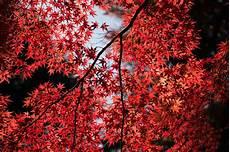 black garden 4k wallpaper leaves tree up 5k hd nature 4k wallpapers