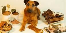 Welches Hundefutter Ist Das Beste - welches ern 228 hrungskonzept f 252 r den hund ist das richtige