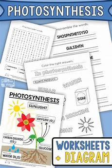photosynthesis experiments worksheets 12671 photosynthesis worksheets for itsy bitsy